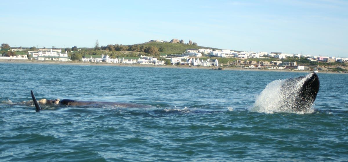 Strandloper-Whale-2